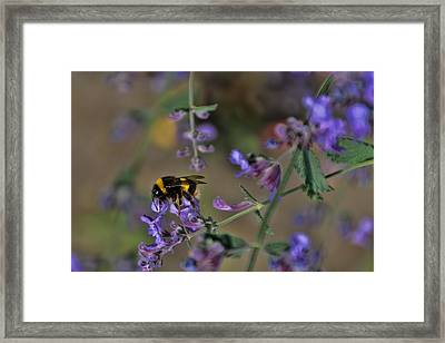 Framed Print featuring the photograph Bee by David Gleeson