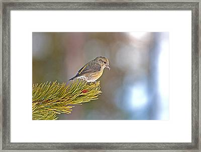 Bird Framed Print by Elijah Weber