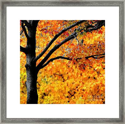 Blaze Framed Print by Optical Playground By MP Ray