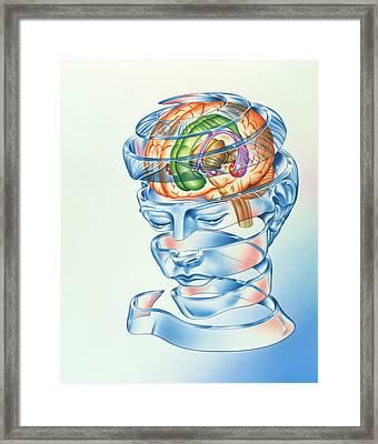 Brain Limbic System Framed Print by John Bavosi