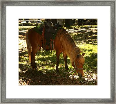 Brown Horse Framed Print by Blink Images