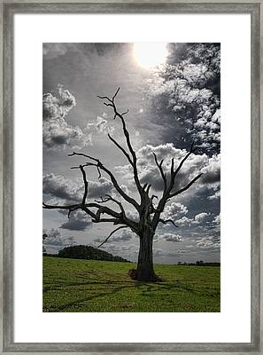 By The Light Of The Moon Framed Print by Jan Amiss Photography