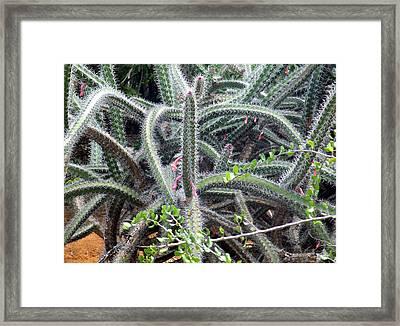 Framed Print featuring the digital art Cactus by Vicky Tarcau