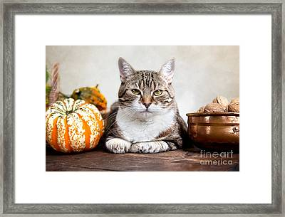 Cat And Pumpkins Framed Print