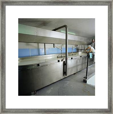 Cheddar Cheese Production Framed Print by David Munns