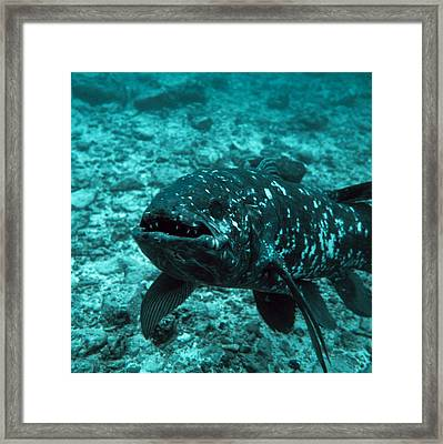 Coelacanth Fish Framed Print by Peter Scoones