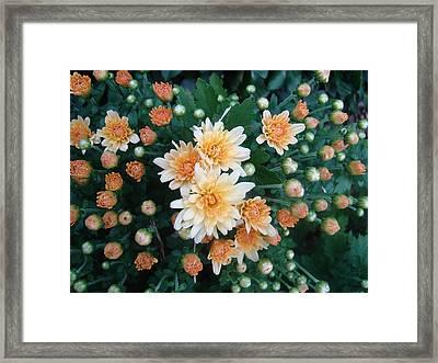 Contemplate The Flower Framed Print by Johanna Kohn