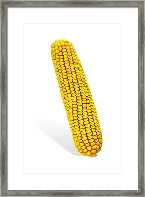 Corn Cob Framed Print