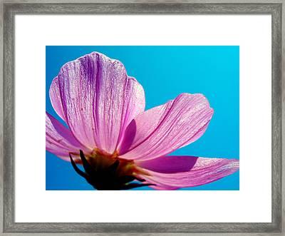 Cosmia Flower Framed Print