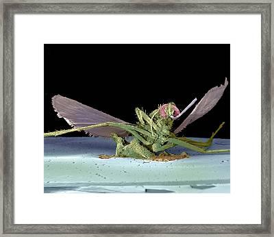 Dead Fly, Sem Framed Print by Volker Steger