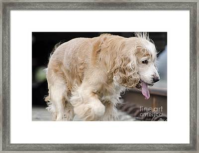 Dog Walking Framed Print by Mats Silvan