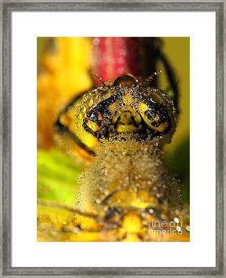 Dragonfly In Drops Framed Print by Odon Czintos