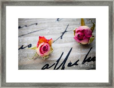 Dried Roses Framed Print by Kati Molin