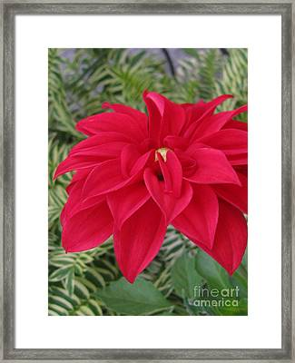 Framed Print featuring the photograph Effortless by Tina Marie