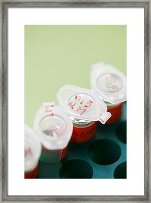 Eppendorf Tubes Framed Print by Cristina Pedrazzini