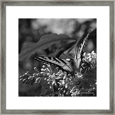 Expectation Of The Dawn Framed Print