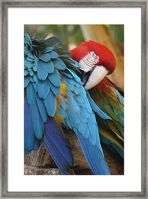 Feather By Feather Framed Print by Valia Bradshaw