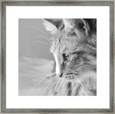 Flitwick The Cat Framed Print