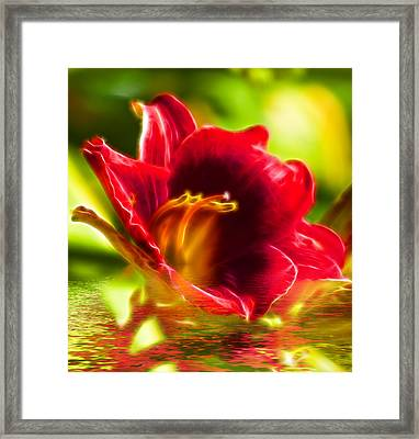 Floral Fractals And Floods Digital Art Framed Print by David French