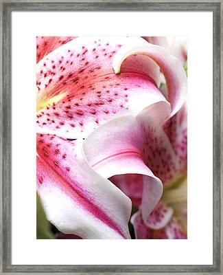 Flower Close Up Framed Print by Ignaz Uri