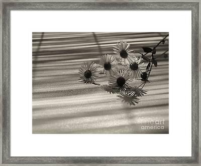 Flower  Framed Print by Odon Czintos