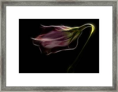 Flower Framed Print by Stelios Kleanthous
