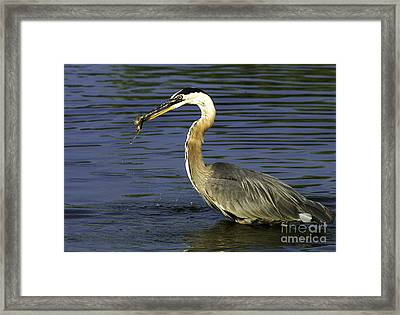 Framed Print featuring the photograph 2 For 1 Dinner Special by Clayton Bruster