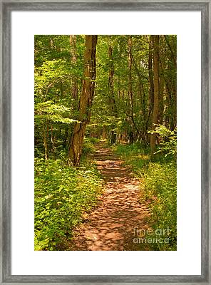 Forest Trail Framed Print by Bob and Nancy Kendrick