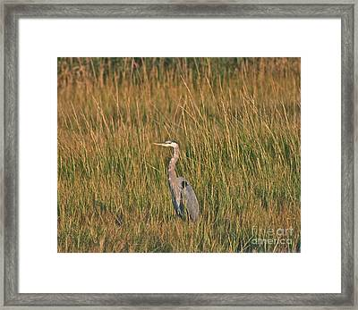 Framed Print featuring the photograph Great Blue Heron by Cindy Lee Longhini