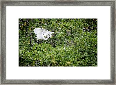 Great Egret Framed Print by Mike Rivera