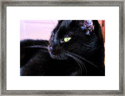 Green Eyes Framed Print by Art Dingo