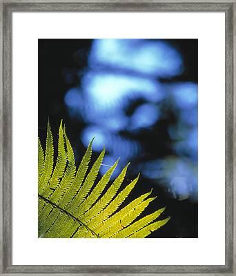 Hapu'u Fern Framed Print