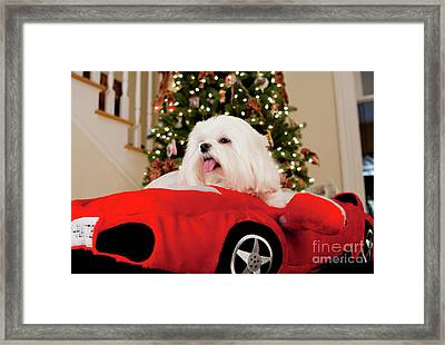 Framed Print featuring the photograph 2 Haute by Leslie Leda