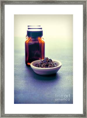 Healing Plants Framed Print by HD Connelly