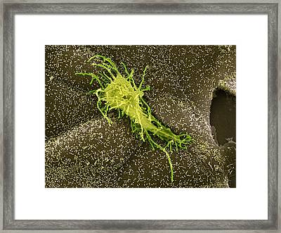 Hela Cell, Sem Framed Print by