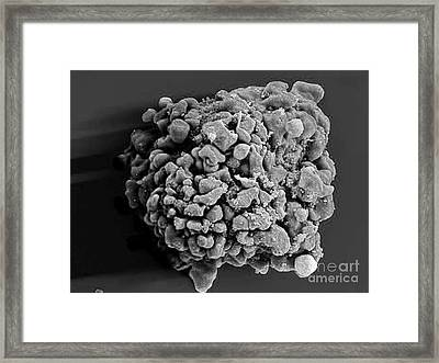 Hiv-infected H9 T Cell, Sem Framed Print by Science Source