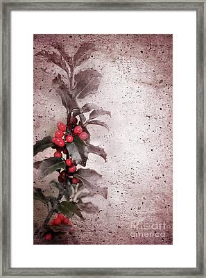Holly Branch  Framed Print by Carlos Caetano