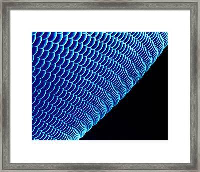 Hover Fly Eye, Sem Framed Print by Susumu Nishinaga