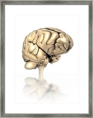 Human Brain, Artwork Framed Print