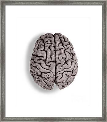 Human Brain Framed Print by Omikron