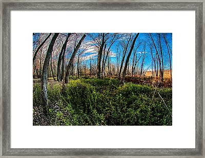 Framed Print featuring the photograph Illinois River Bottoms by Kimberleigh Ladd