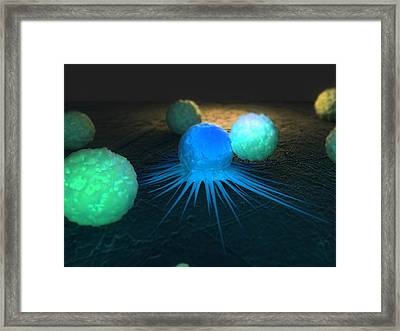 Immune Response To Cancer, Artwork Framed Print by Sciepro