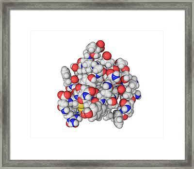 Insulin Molecule Framed Print by Laguna Design