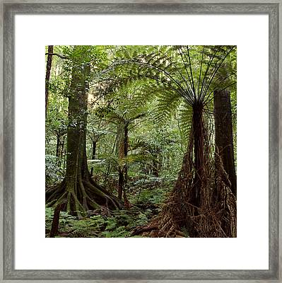 Jungle Framed Print by Les Cunliffe