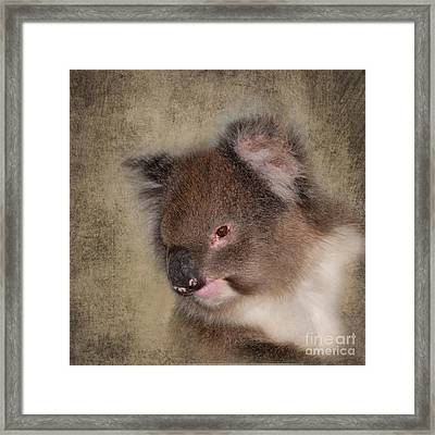 Koala Framed Print by Louise Heusinkveld