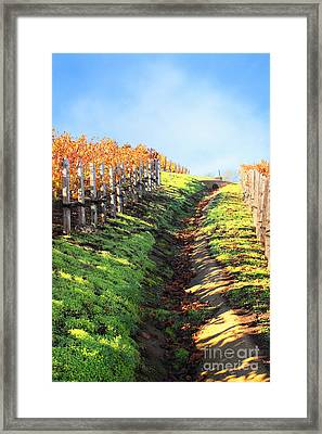Late Autumn In Napa Valley Framed Print by Ellen Cotton