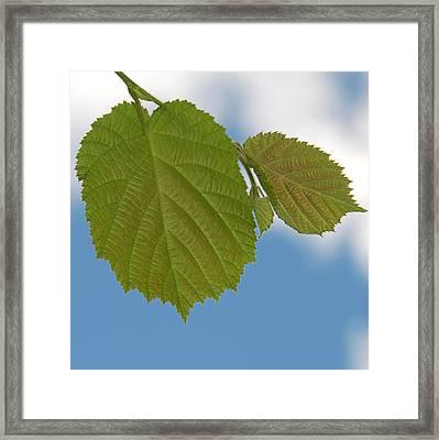 Leaf Framed Print by Design Windmill