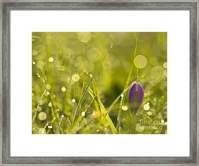 Light Flowers Framed Print by Odon Czintos