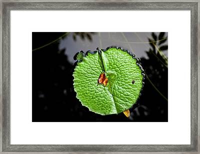 Lily Pad Framed Print by Robert Ullmann
