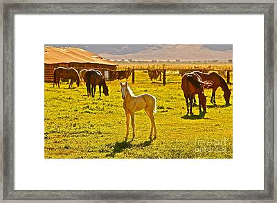 Little Blondie Framed Print